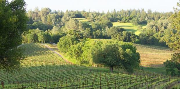 Yorba Vineyard